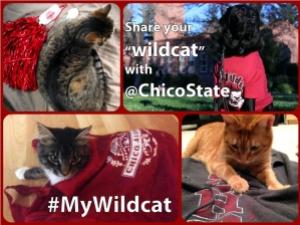 mywildcat