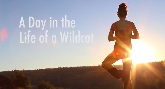 A Day in the Life of a Wildcat