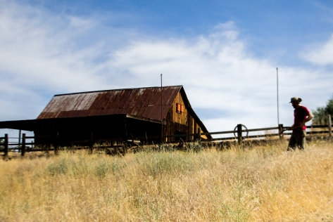 This barn is one of several historical structures on the reserve.