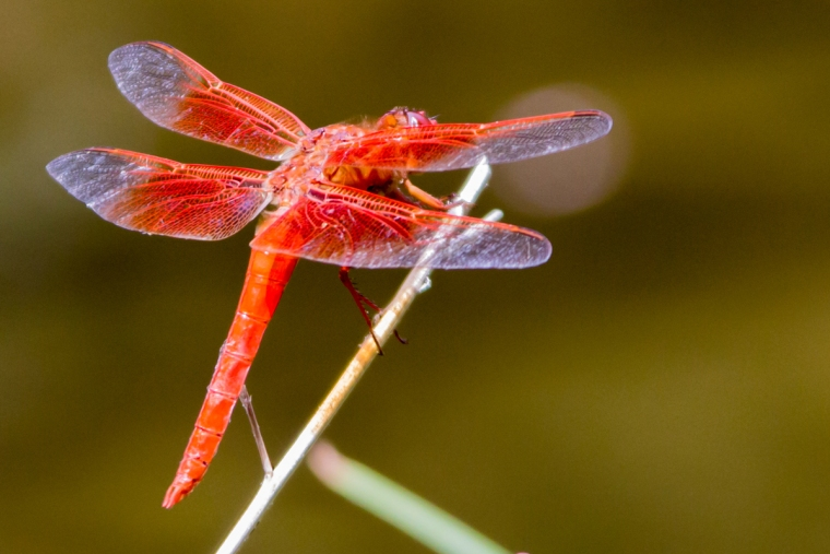 The reserve is home to more than 140 different wildlife species including this dragonfly.